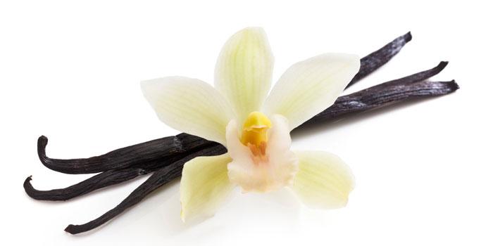 vanilla-with-flower-700-web